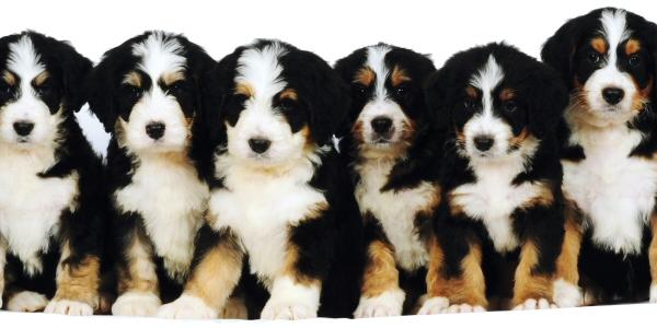 Puppy Dog Rescue Albany Wa
